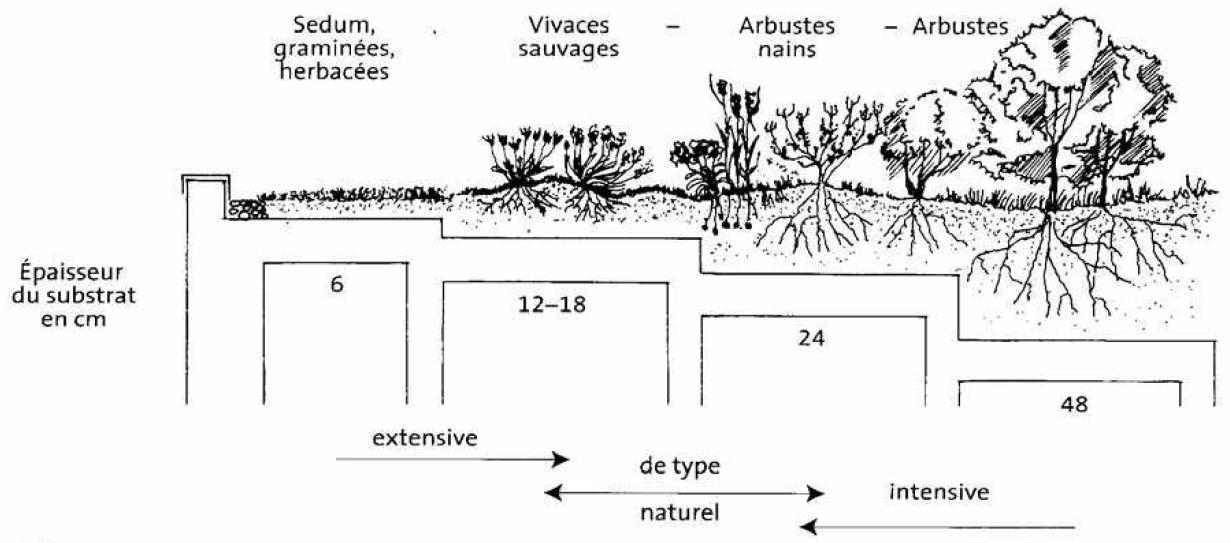 Extrêmement GuidEnR HQE > L'approche technique de la toiture végétalisée > Les  EX42